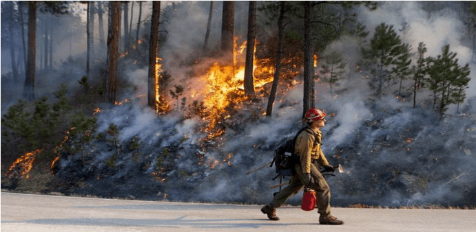 Firefighter walking along road with trees and brush on fire in the background
